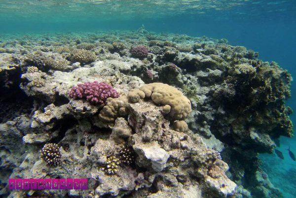 Corais no Mar Vermelho em Sharm El Sheikh