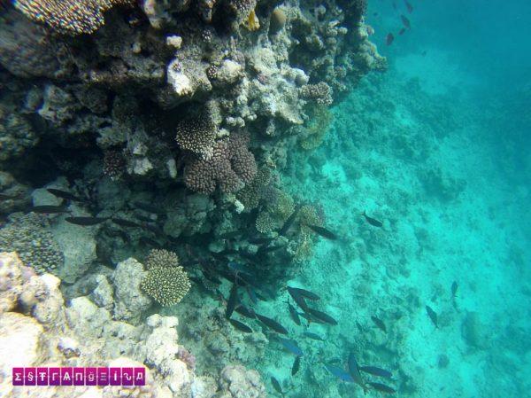Mergulhar ou fazer snorkeling em Sharm El Sheikh é passeio obrigatório!