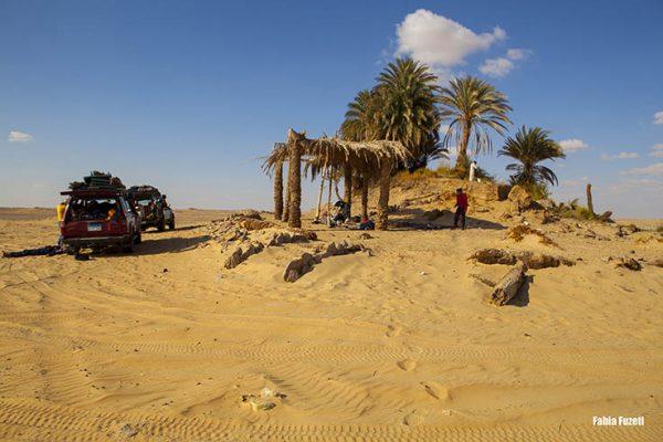 Um oásis no Western Desert, Egito.