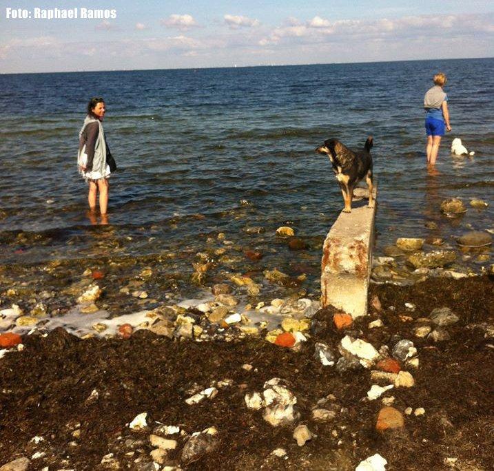 o-que-fazer-em-malmo-suecia-praia