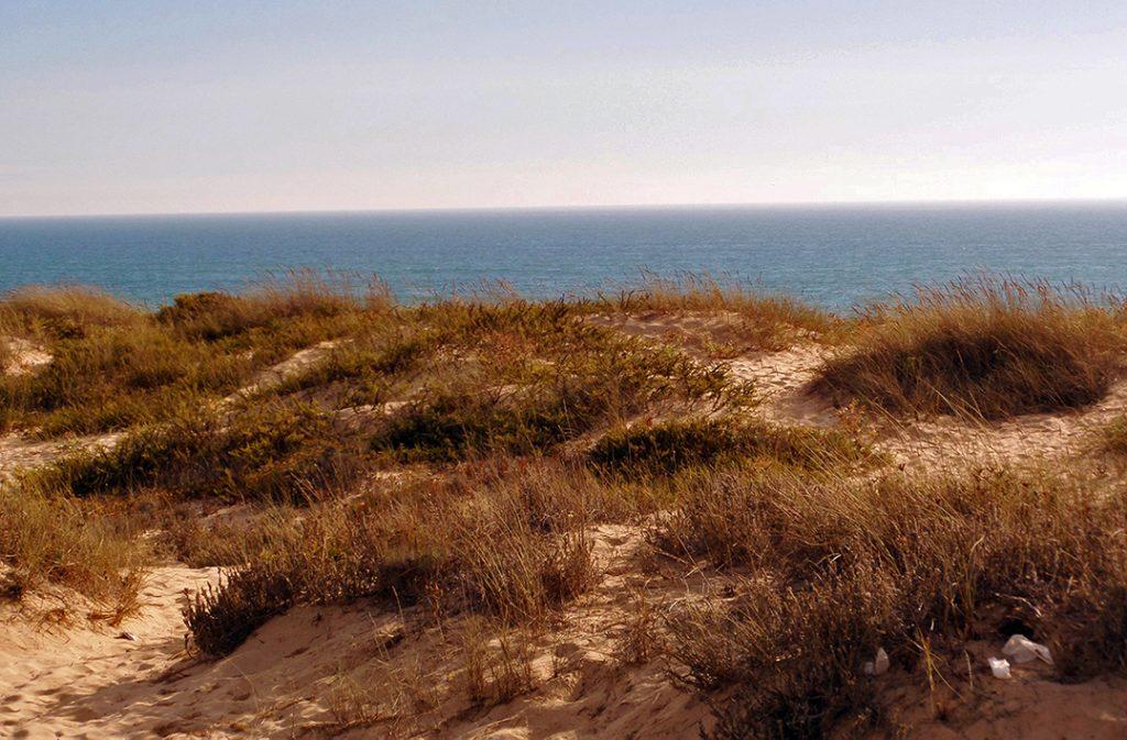 Descendo do trem, você está a poucos passos da praia. Cuidado com os espinhos enquanto caminha