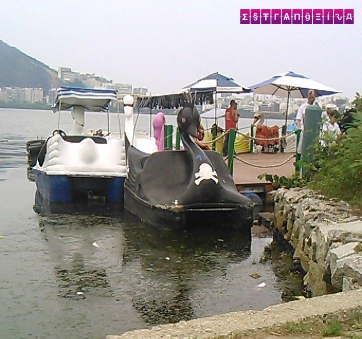 O pedalinho do cisne negro, na Lagoa Rodrigo de Freitas
