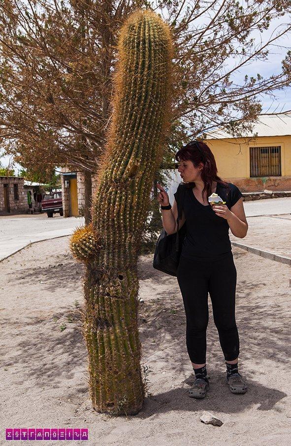 lagunas-altiplanicas-atacama-passeio-cactus
