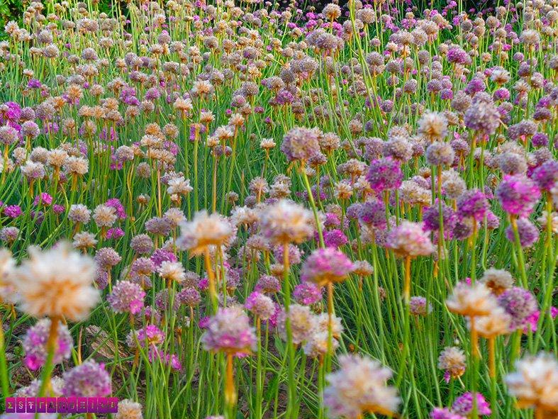 parque-cervantes-rosas-flores