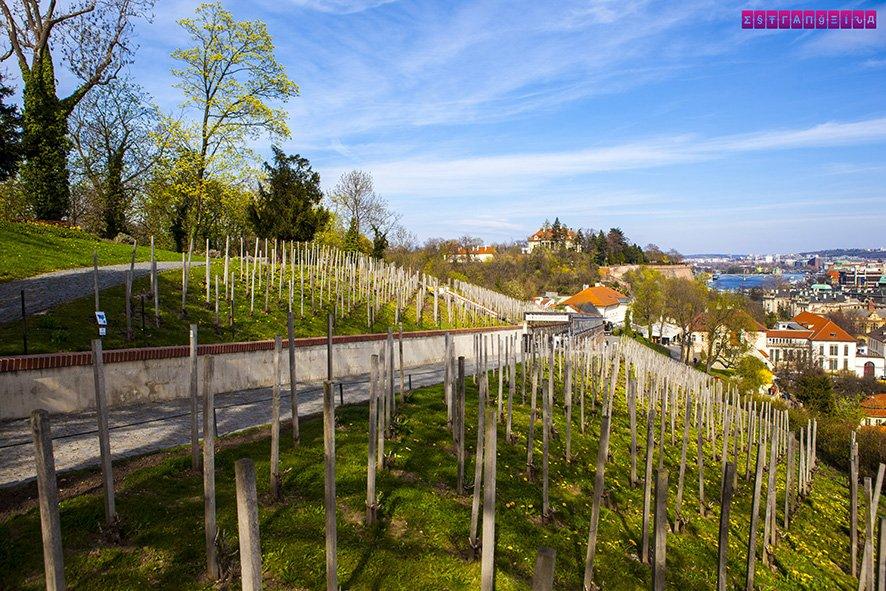 Vinhas de São Wenceslau
