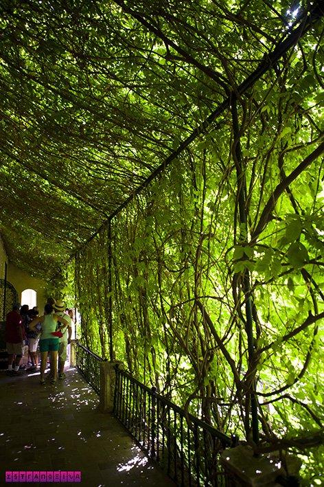 Logo na entrada do Real Alcázar nos deparamos com essa bela parede verde.