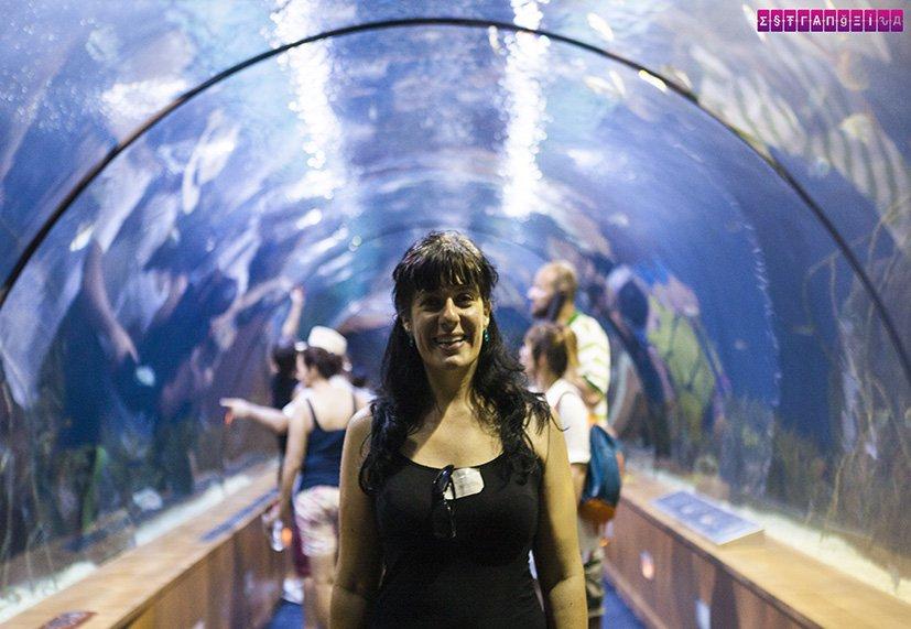 As paredes e teto de vidro do Oceanografic são ultra legais