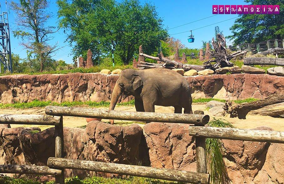 E os elefantes... dá dó de vê-los presos, né? :(