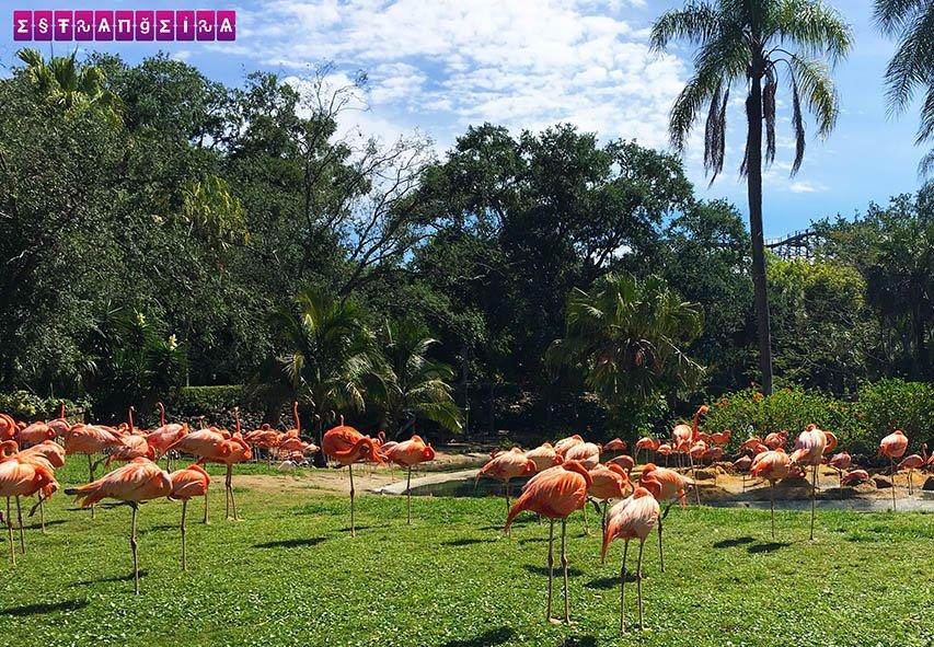 Prepare-se para ver diversos animais no parque, tipo esses Flamingos cor-de-rosa!
