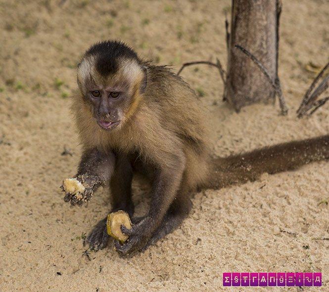 lencois-maranhenses-roteiro-macacos