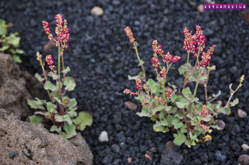 vulcao-etna-catania-sicilia-flores