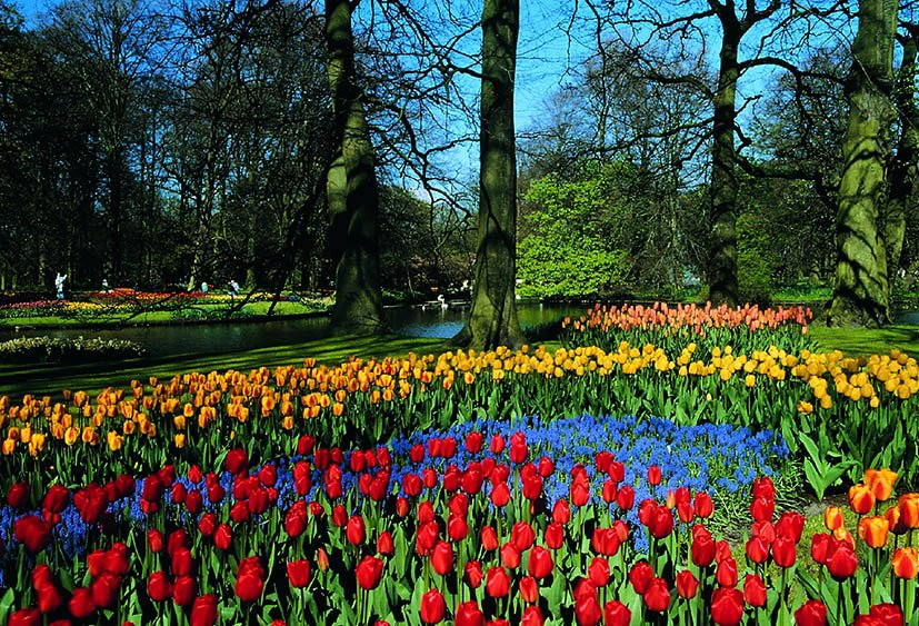 keukenhof-amsterdam-tulipas-1