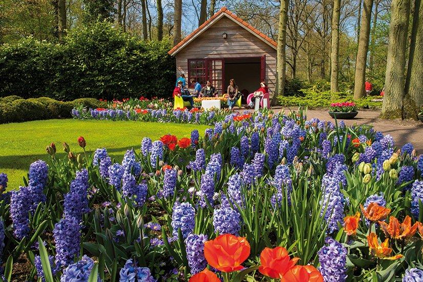 keukenhof-amsterdam-tulipas-2
