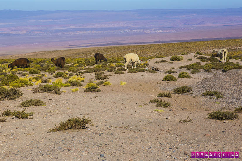 Salar-de-Tara-Atacama-Chile-1