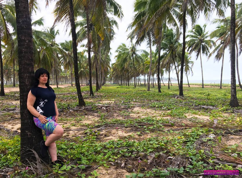 o-que-fazer-em-Porto-de-Galinhas-coqueiros-maracaipe