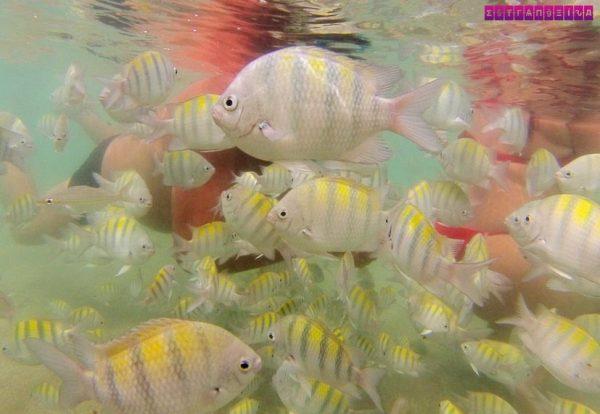 o-que-fazer-em-Porto-de-Galinhas-nadar-com-peixes
