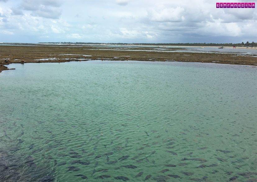 o-que-fazer-em-Porto-de-Galinhas-piscinas-naturais-2