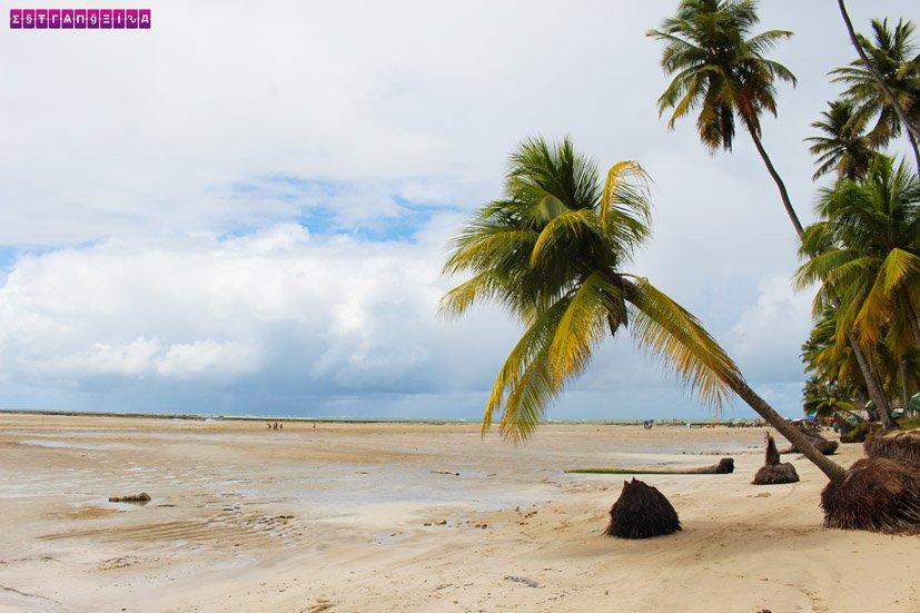 praia-dos-carneiros-coqueiro