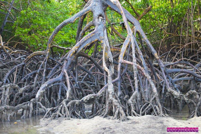 praia-dos-carneiros-mangue