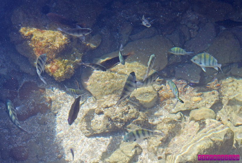 praia-dos-carneiros-peixes