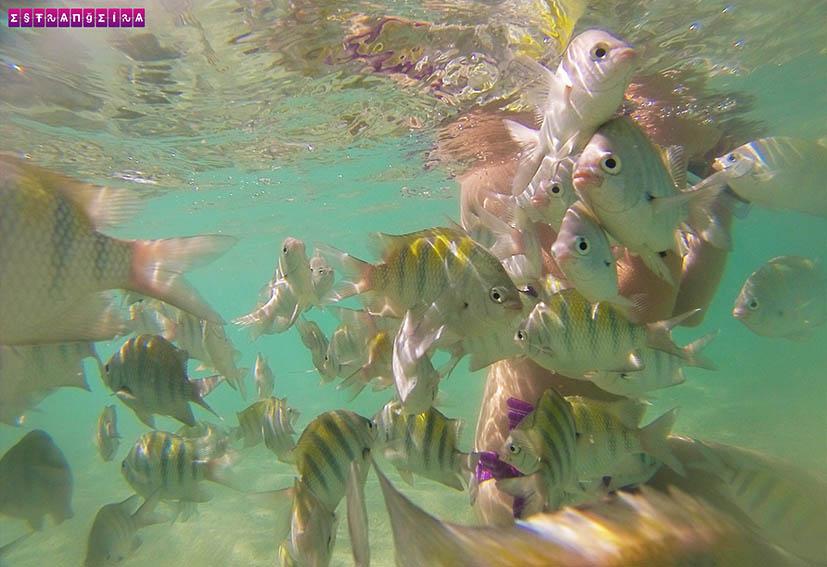 peixes-taocas-gales-piscinas-naturais-maragogi