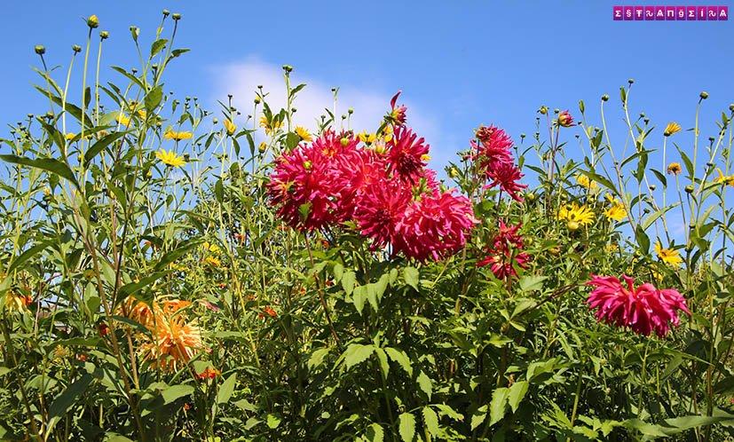 Jardins-de-monet-Giverny-flores