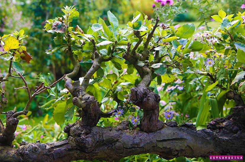 Jardins-de-monet-giverny-jardim-seco