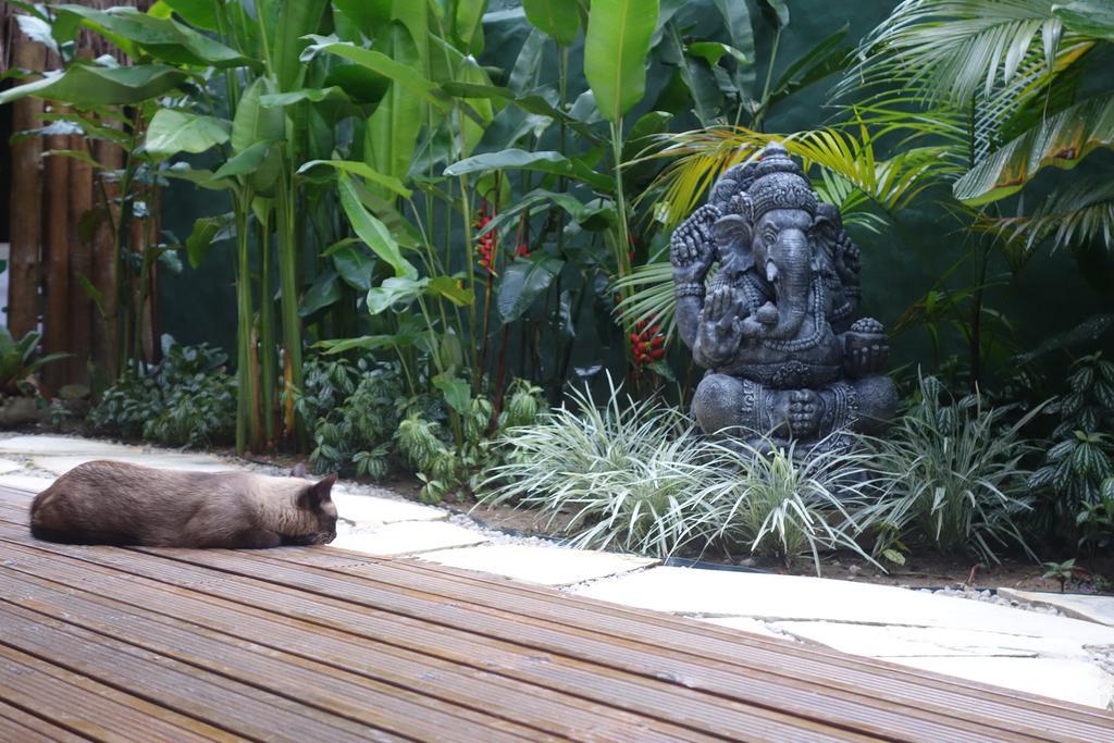 viagens-zen-no-brasil-samudrá-yoga-villas-ubatuba-gato