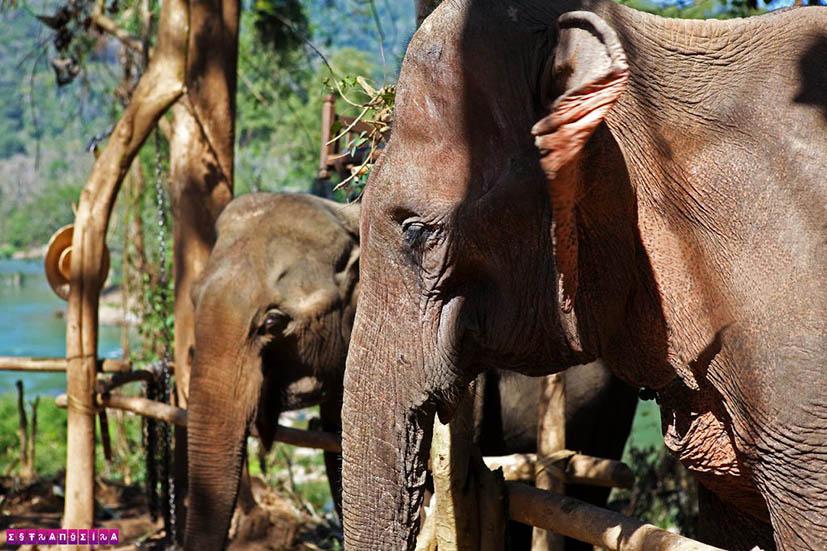 elefantes-luang-prabang-laos