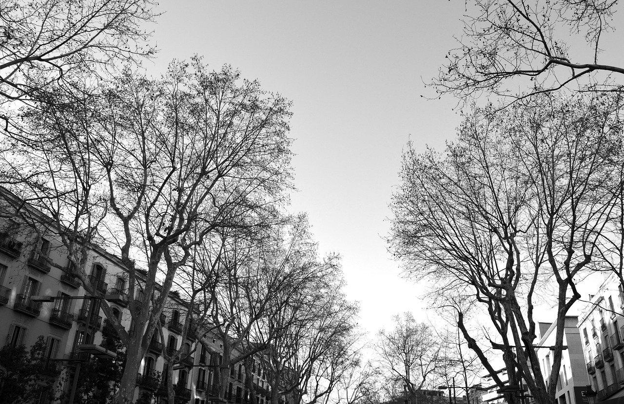 barcelona-no-outono-ramblas-arvores