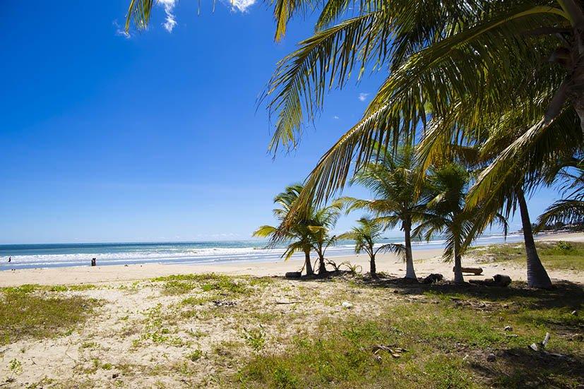 coqueiros na areia da praia de Flecheiras