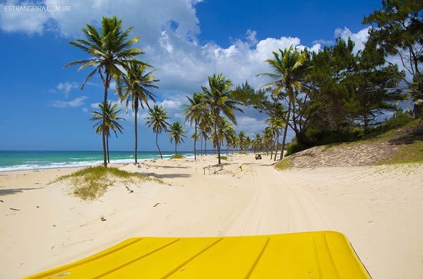 coqueiros em praia de areia branca
