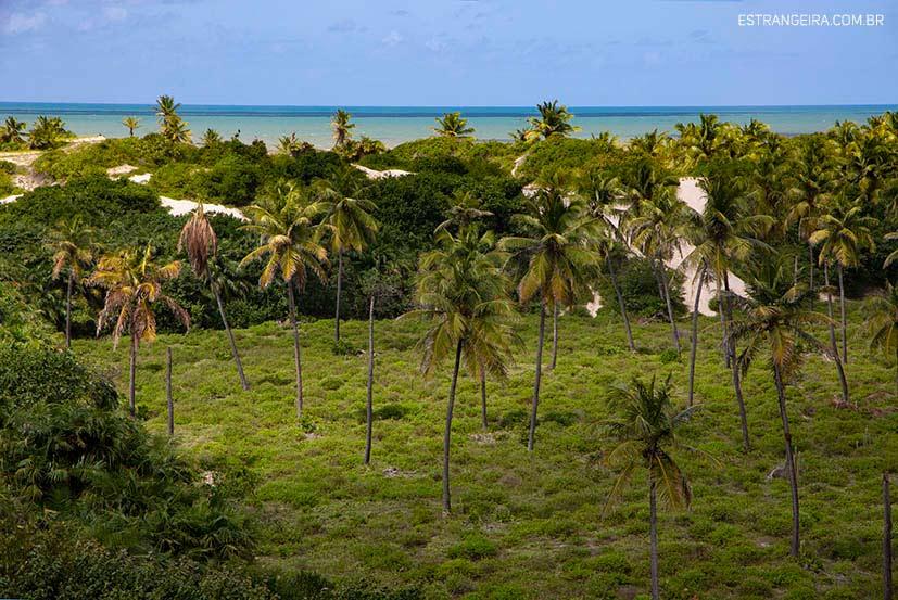 mangue-seco-rio-coqueiros
